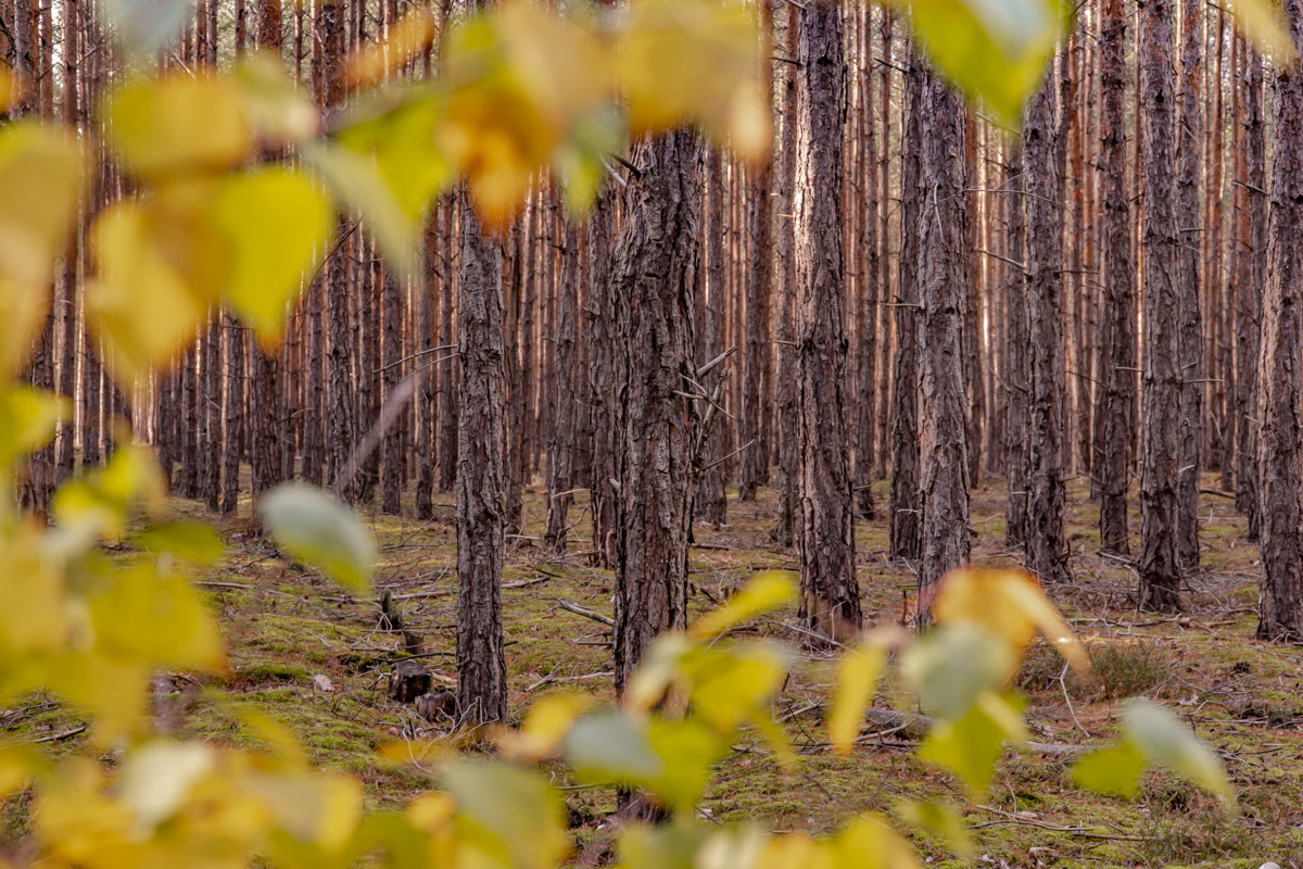 polska złota jesień las